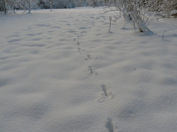 empreintes-sur-la-neige noel près de rouen