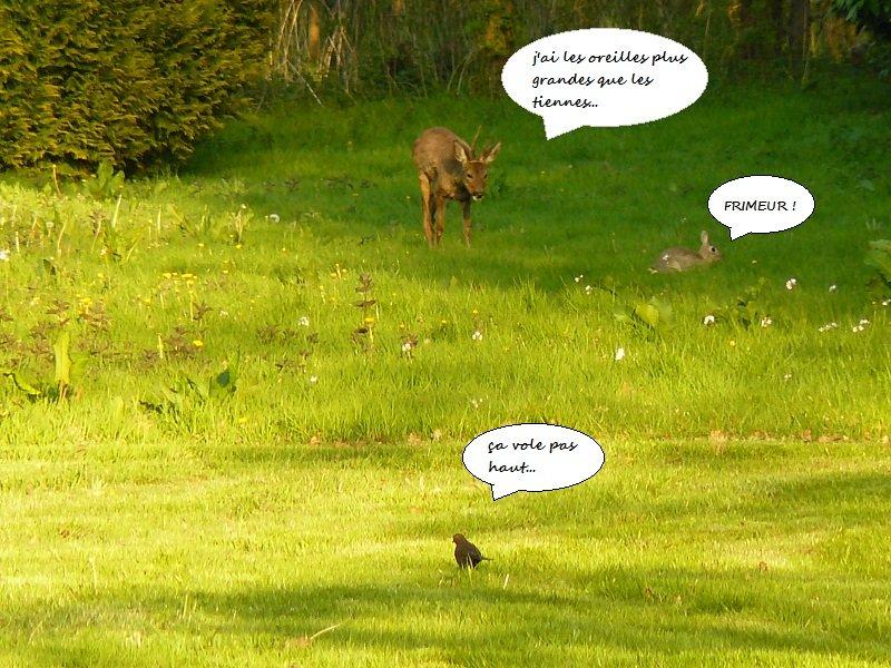 lapin-oiseau-chevreuil