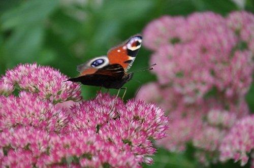 la faune de la ferme  dans la ferme nature papillon-de-bretteville1