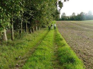 la ferme nature et la biodiversité dans la ferme nature le-long-des-haies-brise-vent-300x225