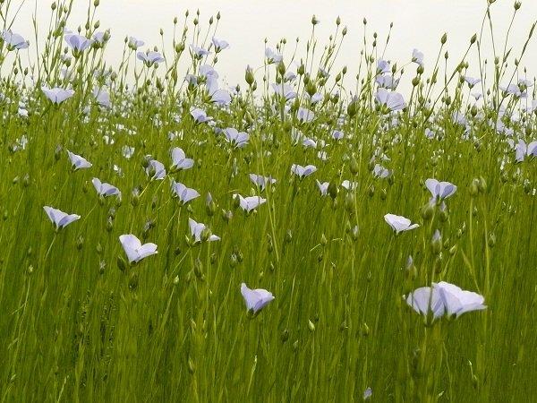 un mois de juin à photographier dans la ferme nature culture-du-lin