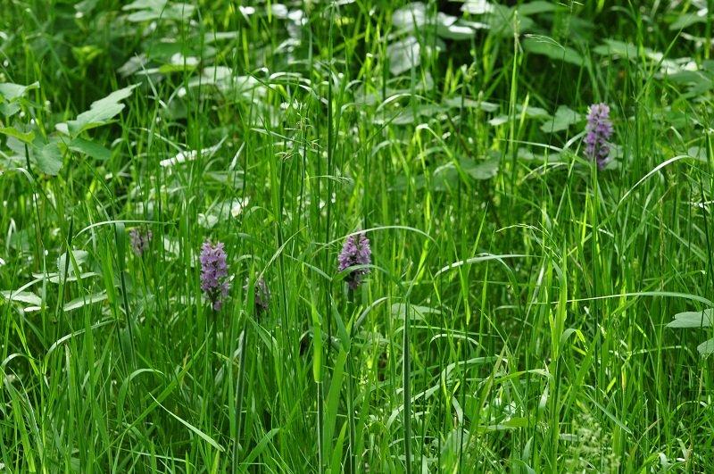 juillet dans les blés dans la ferme nature DSC_0711
