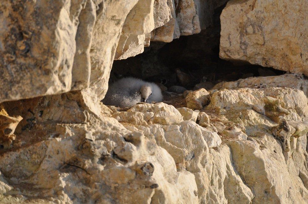 ...sous l'oeil amusé de ce douillet juvénile bien calé sur le flan de la falaise