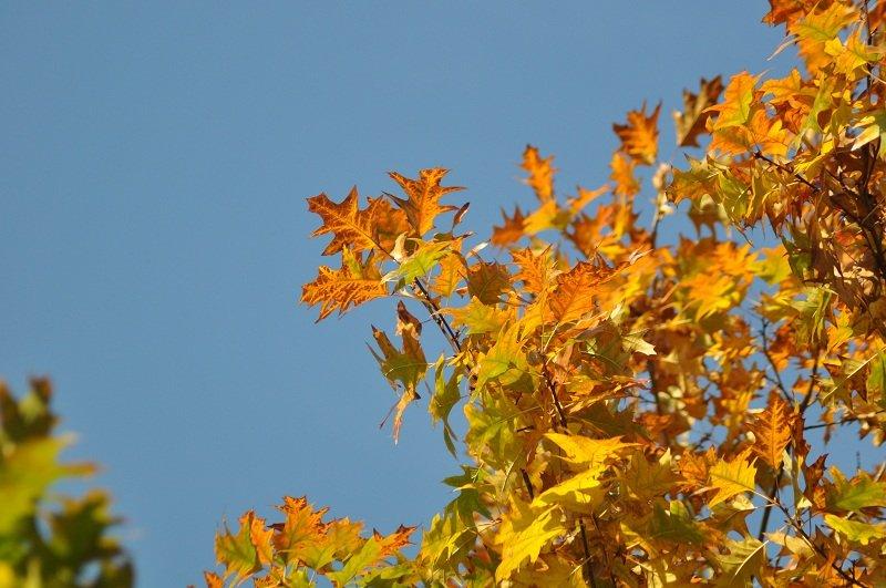 feuilles-dautomne-copie AUTOMNE dans la ferme nature
